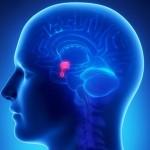 przysadka mozgowa